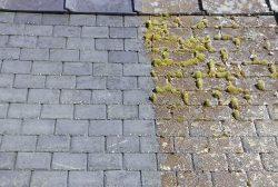 Go Moss Remover Selco