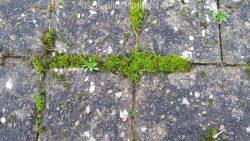 Go Moss Remover
